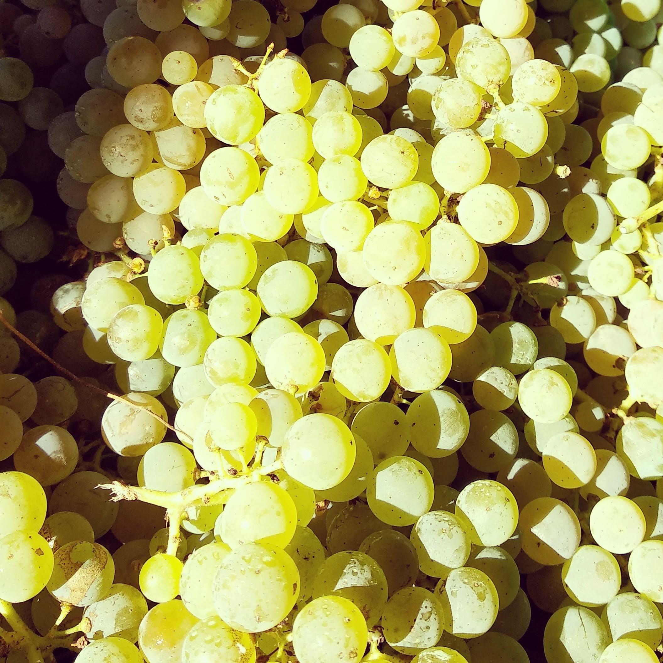 Os Areeiros  uva(Albariño)